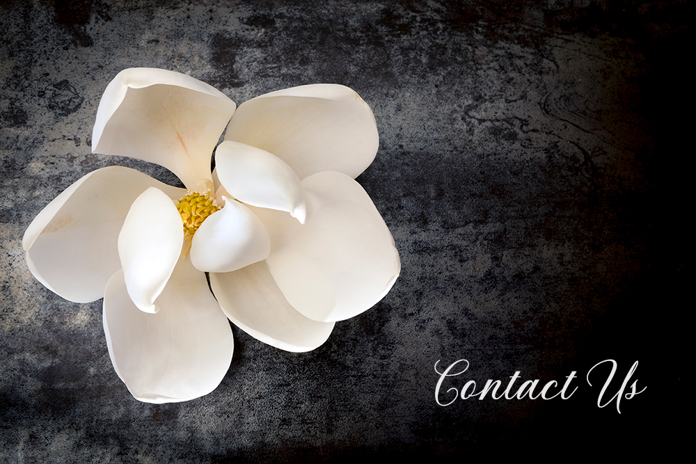 Magnolia blossom with Contact Us text